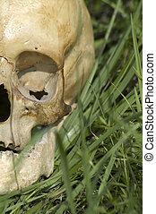 crânio humano, detalhe