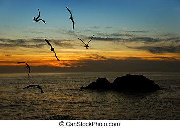 crépuscule, dans, californie