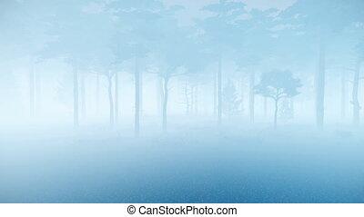 crépuscule, spooky, pin, brouillard, forêt, épais, 4k