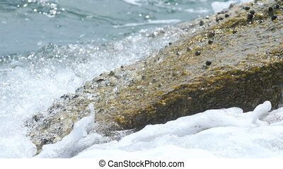 Crab and rockskippers on the rock at the beach - Crab on the...