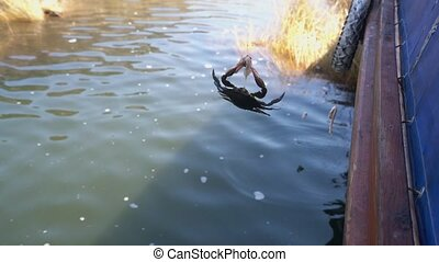 Crab catching bait fixed on fishing line video - Crab...