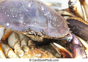 Crab Close-up - Alaskan Dungeness crab close-up with other...