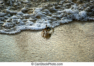 Crab coming out of the water