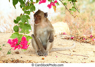 Crab-eating macaque monkey of southeast asia sitting under tree