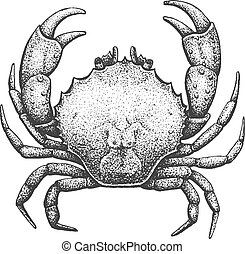 Crab Engraving Illustration - Crab - Classic Drawn Ink ...