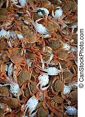 Crab from Mediterranean, texture pattern