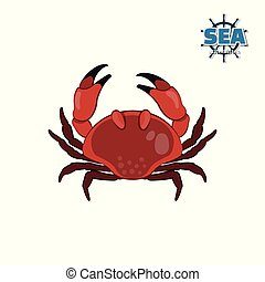 Crab in cartoon style on a white background