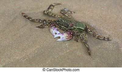 Crab in shallow water on the beach