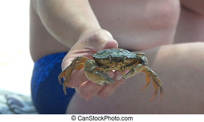Crab is kept by a male hand on the Black Sea shore in lo-mo
