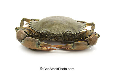 crab isolated on white background, sea food