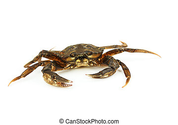 Crab isolated on white