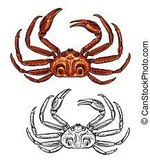 Crab isolated seafood and fishery sketch icon