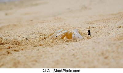 Crab making a hole in sand