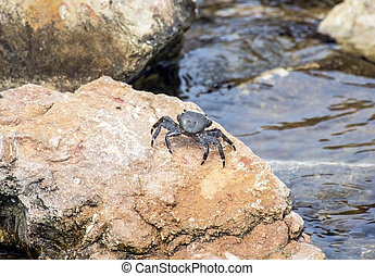 crab on a stone
