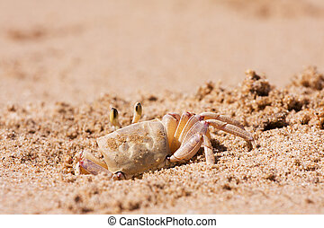 Crab on the beach sand