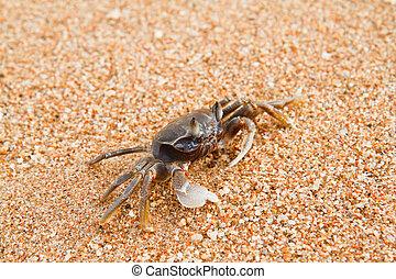 crab on the beach