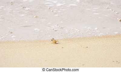 Crab on the sandy beach - Ghost crab's, Horned Ghost Crab or...