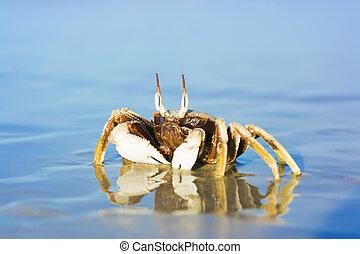 Crab on the tropical beach