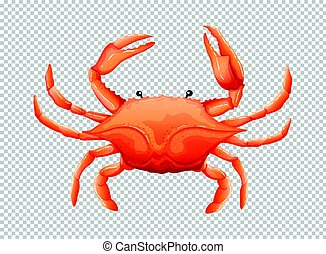 Crab on transparent background