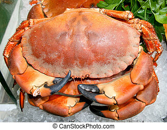 Crab - Red king crab with big sharp legs