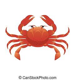 crab sea animal water seafood nature ocean cartoon vector...