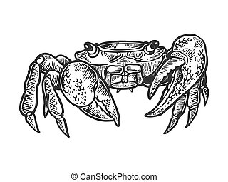 Crab sea animal engraving vector illustration. Scratch board style imitation. Black and white hand drawn image.