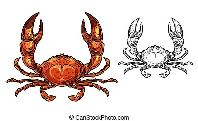 Crab seafood animal or shellfish with raised claws