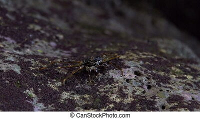 Crab sitting and eating on a rock near sea - Crab crawling...