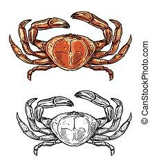 Crab sketch, seafood menu and sea fishing