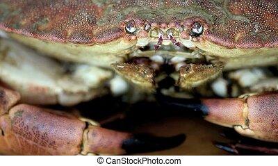 Crab - Taken with a tripod