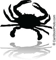 crab illustration vector
