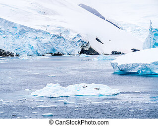 Crabeater seals resting on ice floe in Lemaire Channel, Antarctic Peninsula, Antarctica
