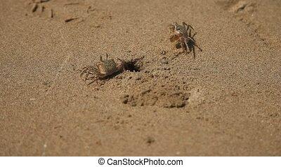 Crabfishes