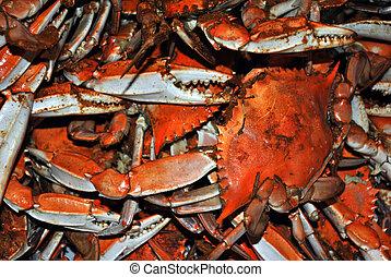 Bushels and Bushels of Hard shelled crabs