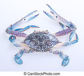 crabs., caranguejos, ligado, a, experiência., caranguejos, ligado, a, fundo