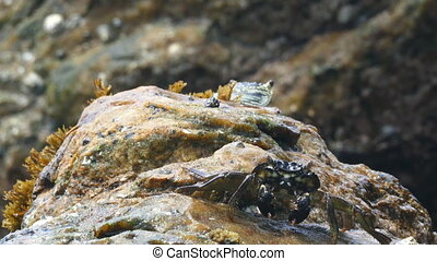crabs eating on stone seashore