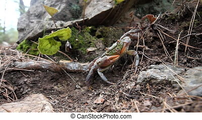 Crabs in the mountains of the Mediterranean - In the frame...