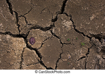 Cracked clay ground into the dry season.