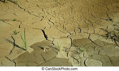 Drought river stream wetland, swamp creek rivulet drying up soil cracked crust earth climate change, surface extreme heat wave caused crisis, environmental disaster earth cracks, death plants green animals, soil dry degradation, lack water, common species grass, marsh lake, reservoir aquaculture, ...