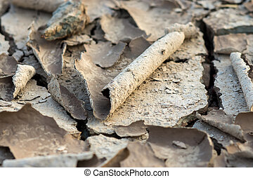 Cracked dried mud in the summer.