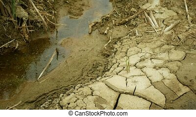 Drought river stream wetland, swamp creek rivulet drying up soil cracked crust earth climate change, surface extreme heat wave caused crisis, environmental disaster clay cracks, death plants green animals, soil dry degradation, lack water, common species grass, marsh lake, reservoir aquaculture, ...