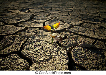 Cracked lifeless soil