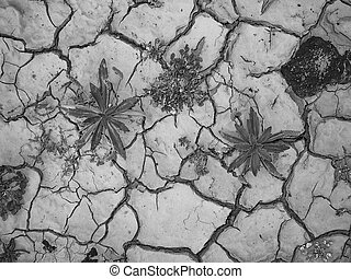 cracked loam by heat in the desert