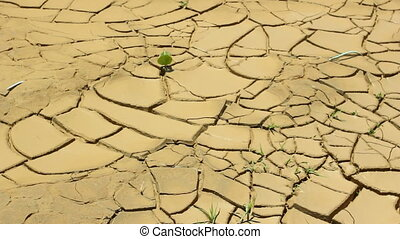 Cracked mud at the bottom of a drying pond
