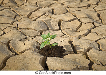 cracked soil - small plant in a cracked soil