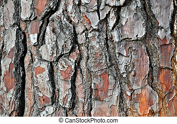Old dry wood bark texture as background