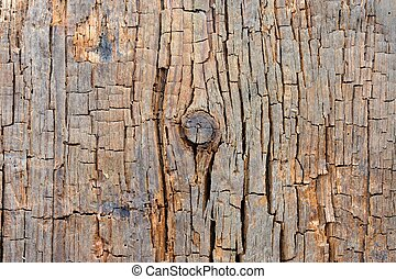 Cracked Wood Texture with Knot