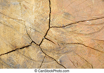 Cracks in the wood