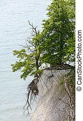 craie, scarp, arbre