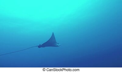 Cramp fish floating underwater. Ocean wildlife. Deepness....